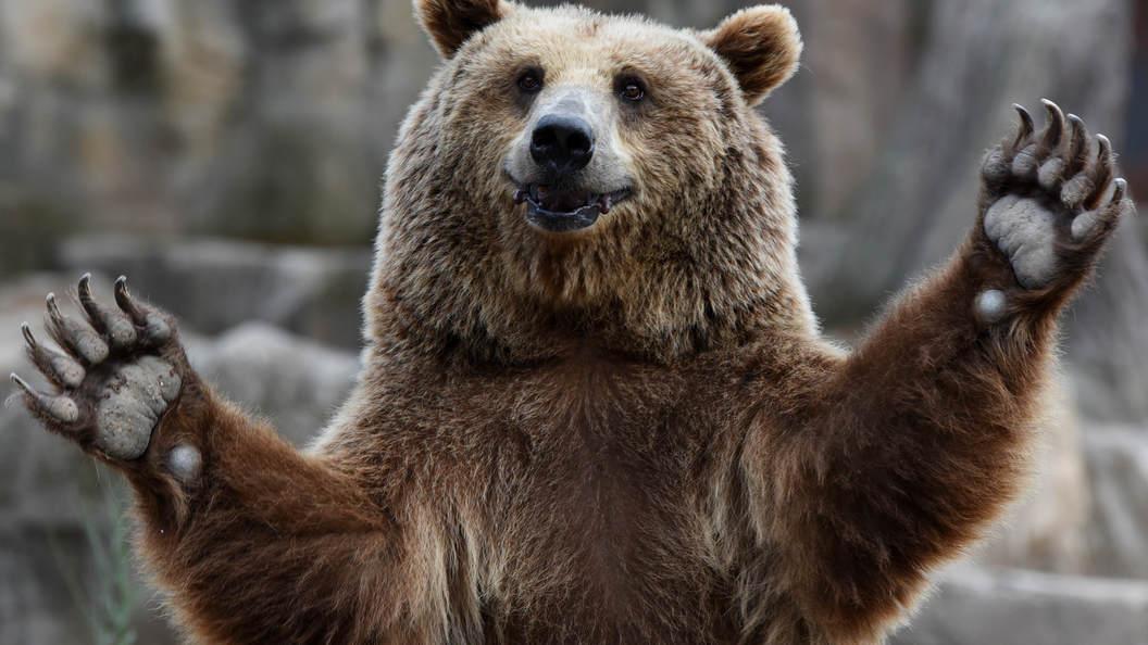 Опубликовали редкое видео про медведицу-маму из Приморья