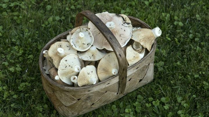 Минсельхоз предложил субсидировать производство грибов в России