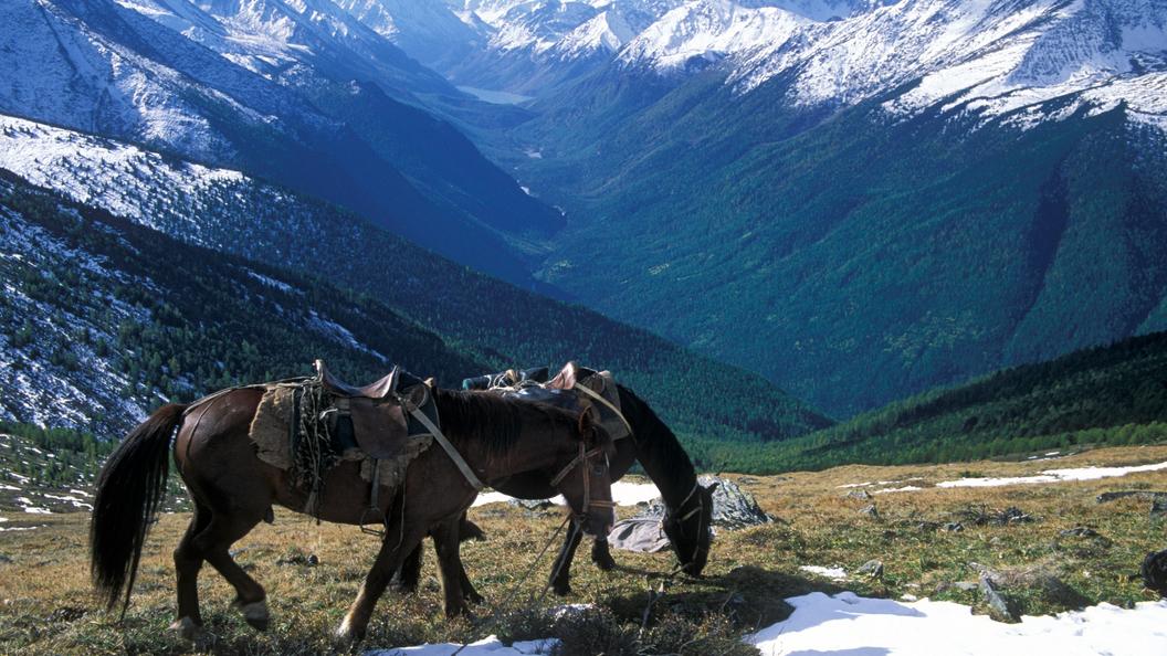 Смертельная прогулка на Алтае: Девочка погибла, упав с лошади