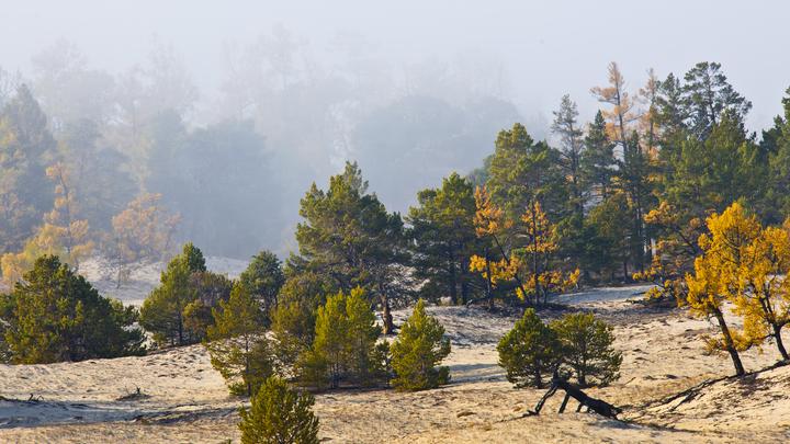 Минприроды предложило разрешить рубки лесов близ Байкала