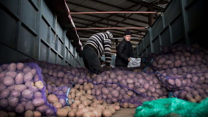 Сгребут трактором вместе с соленьями: Украинские полицейские кошмарят луганских фермеров