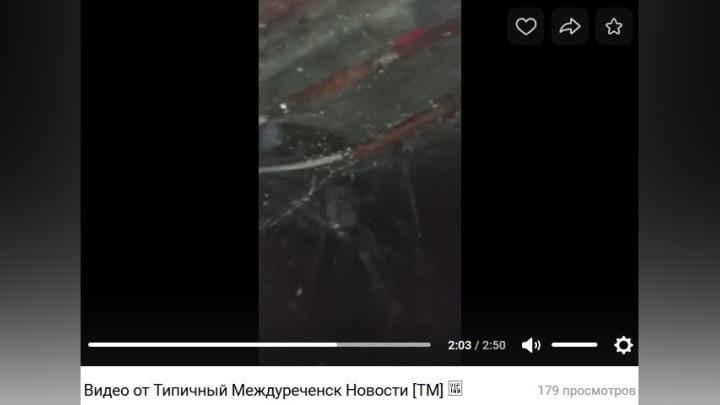 Озеро из нечистот в подвале, в котором можно разводить крокодилов, возмутило жителей Кузбасса