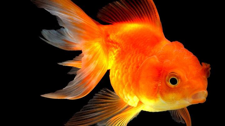 Тайны рыбака и рыбки