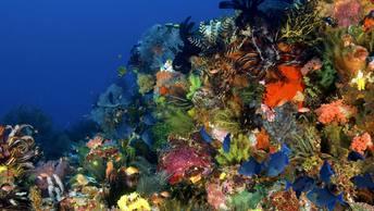 Ученые вывели неубиваемый вид кораллов