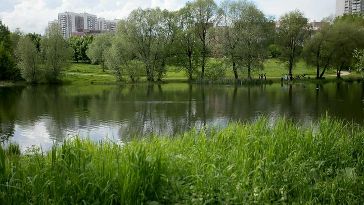 В Ленинском районе Новосибирска может появиться новая зона отдыха