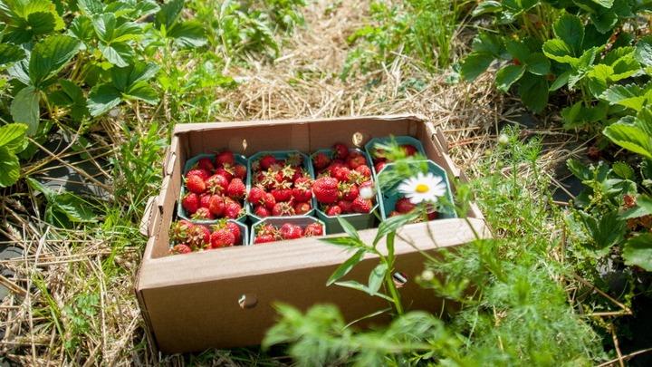 23 фермера из Ивановской области получат гранты «Агростартапа»