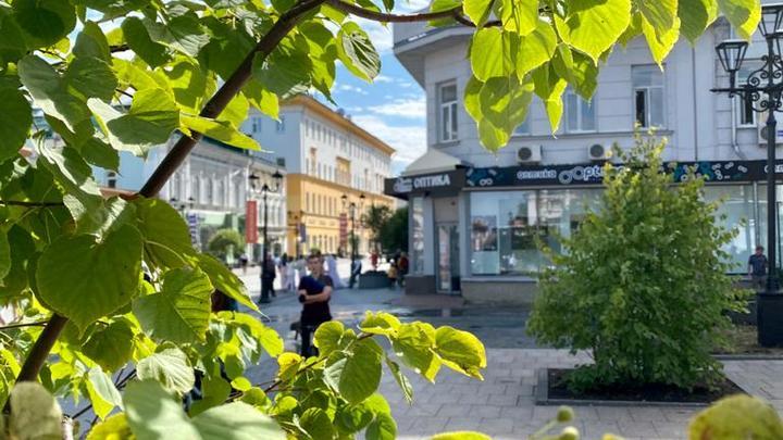 Деревья и кустарники посадили в сквере имени Евстигнеева в Нижнем Новгороде