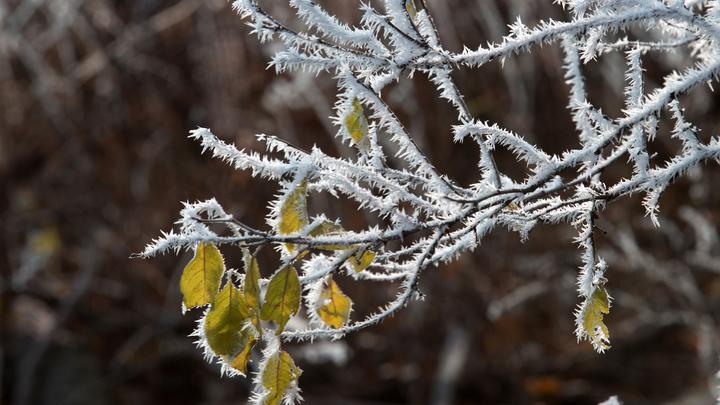 Москвичам обещали почти зимний характер погоды и предупредили об опасном явлении