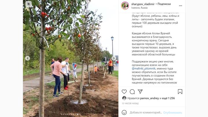 На Аллее врачей в Иванове посадили яблони