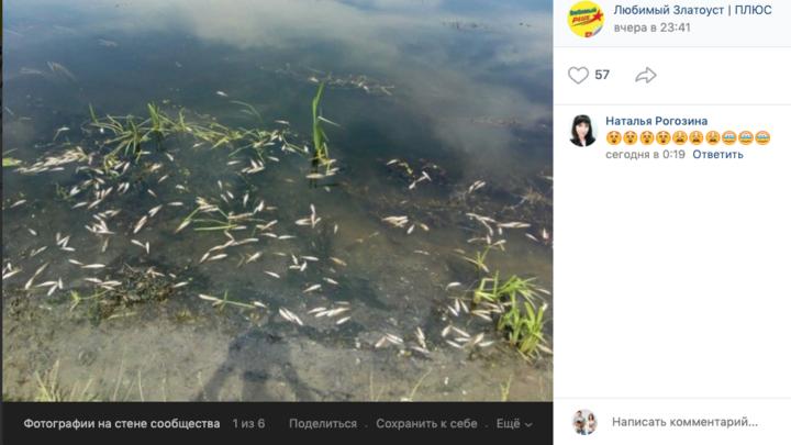 В Златоустовском пруду массово гибнет рыба