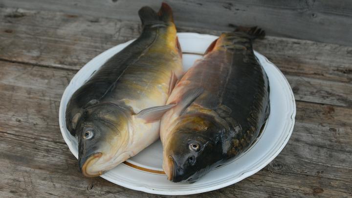 В России утвердили квоты добычи биоресурсов для промышленного рыболовства