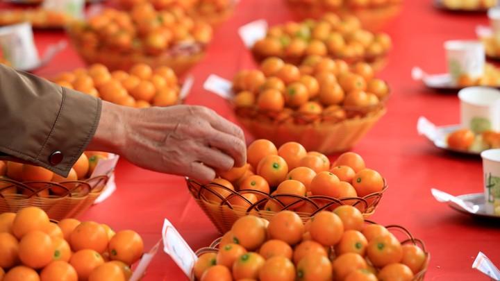 Золотой апельсин остановит рак? Назван уничтожитель опухолей