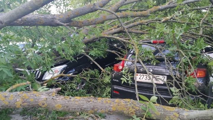 В Минске дерево раскололось на две части и упало на автомобили