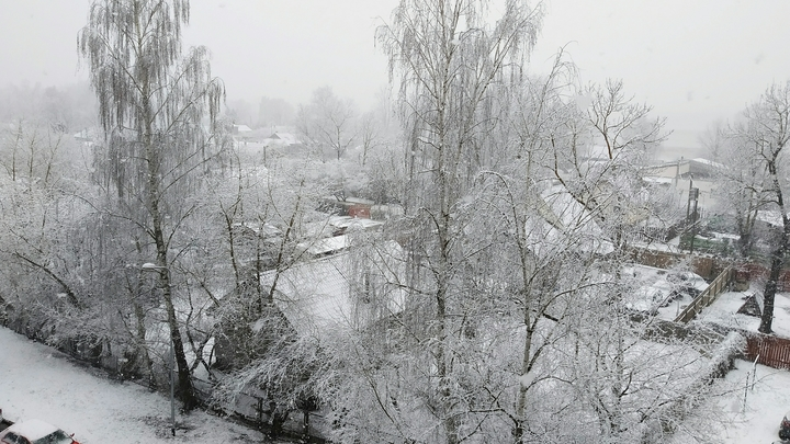 Суровая зима отменяется? Климатолог дала копеечную цену пугающему прогнозу