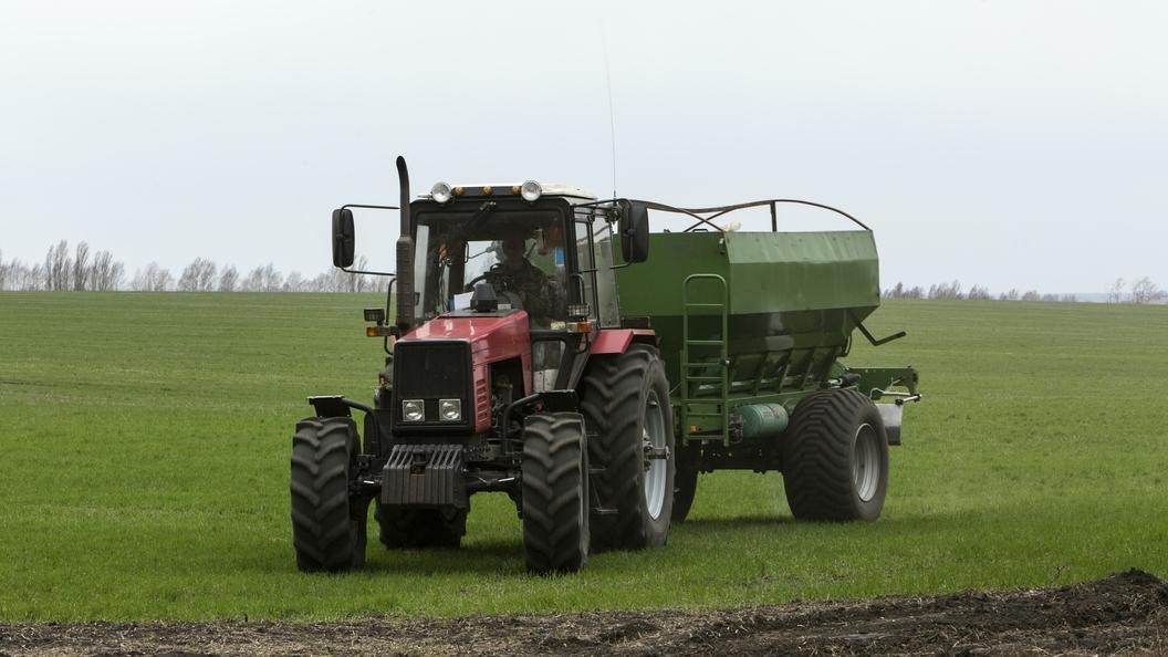 Минсельхоз рассказал, каким будет урожай зерна в этом году