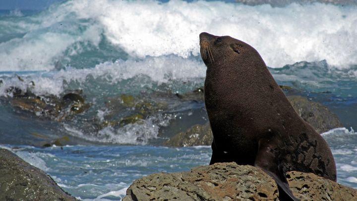 Боевые тюлени на службе России: Появилось видео их тренировок