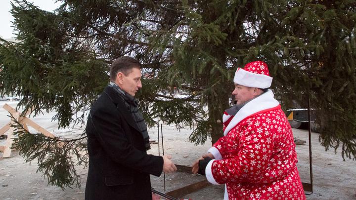 Владимирцы просят губернатора Сипягина не губить живую ель для установки перед белым домом
