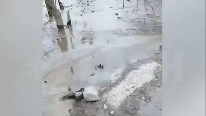В Ленинградской области снова разлили бетон в лесу