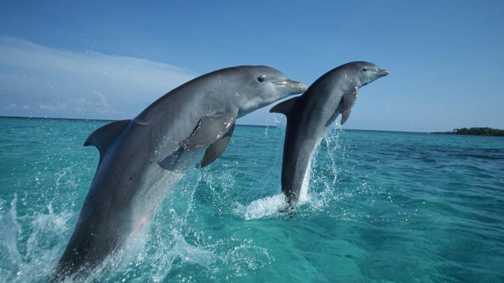 Крымские пожарные спасли двух дельфинов из огня