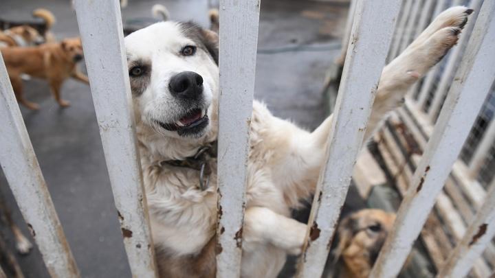 Приют для животных в Ростове появится нескоро. А пока более 5 тысяч собак бродят по улицам