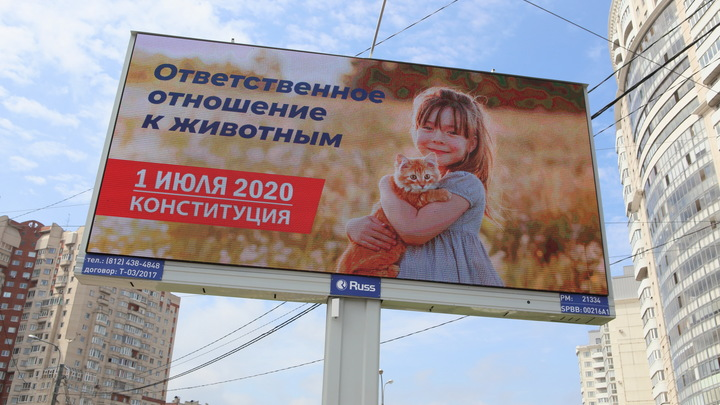 Мымре не понравилось: Сергей Михеев дал элементарное объяснение истерики противников поправок