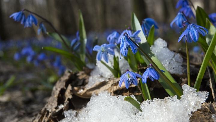 Холодное лето - 2020 отменяется? В Гидрометцентре опровергли нерадостные прогнозы
