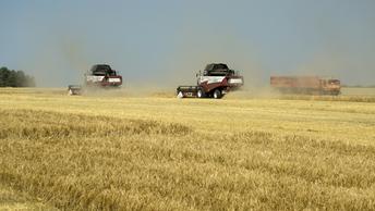 Россия в этом году на четверть нарастила экспорт пшеницы
