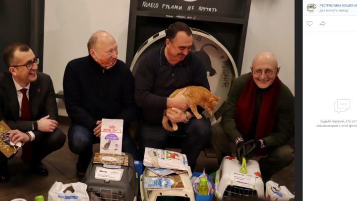 Три кота нашли работу в театрах и парке Санкт-Петербурга