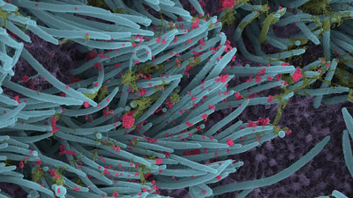 Учёные США: Коронавирус атакует наиболее заразной мутацией