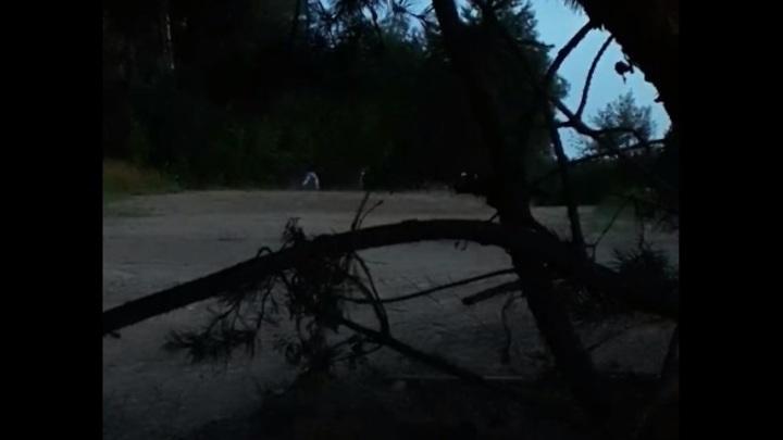 Куда бегут, кто стреляет? Видео со стрельбой, якобы, на границе Литвы и Беларуси попало в Сеть