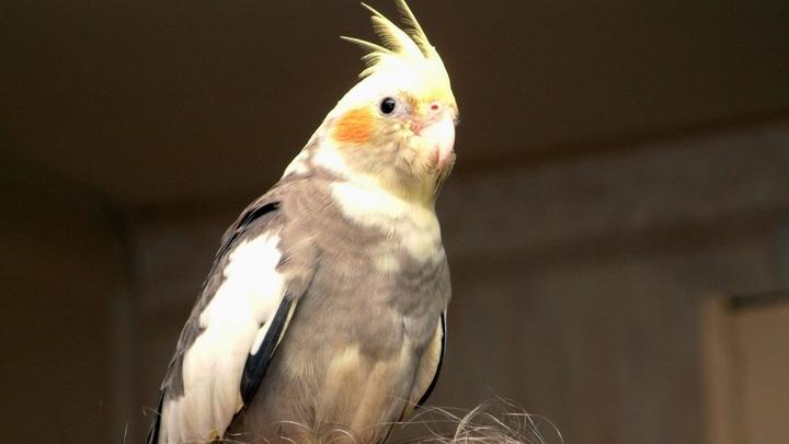 Несчастье русского попугая привело к бану Facebook