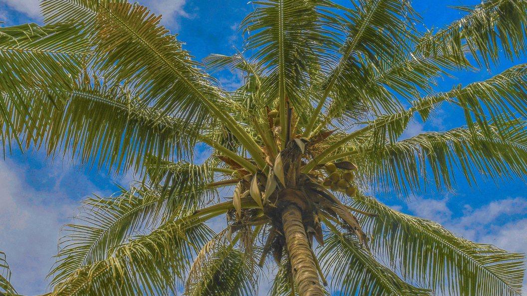 Ученые Через полсотни лет Земля погрузится в тропический