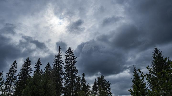 Слухи ходили пять лет: стало известно, как московские сатанисты заманивали жертв в леса Ленобласти