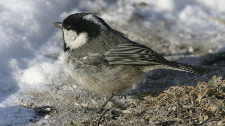 Стало известно, каких птиц петербуржцы могут приманить к своим окнам кормушками