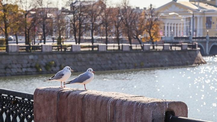 В Челябинске на один день потеплеет, а потом снова похолодает