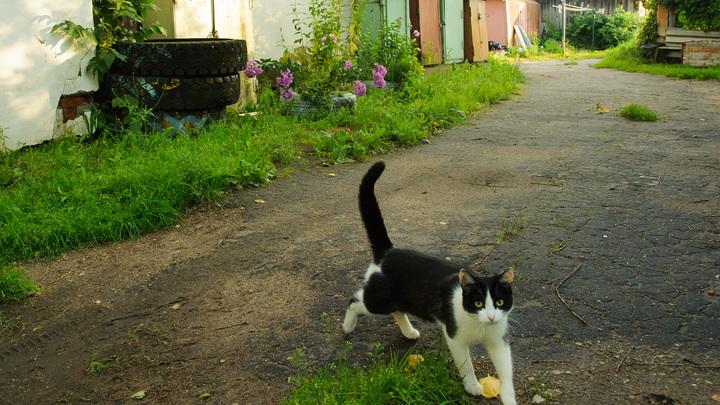 Убил в коляске: На Украине из-за бездомного кота погибла 9-месячная девочка - СМИ