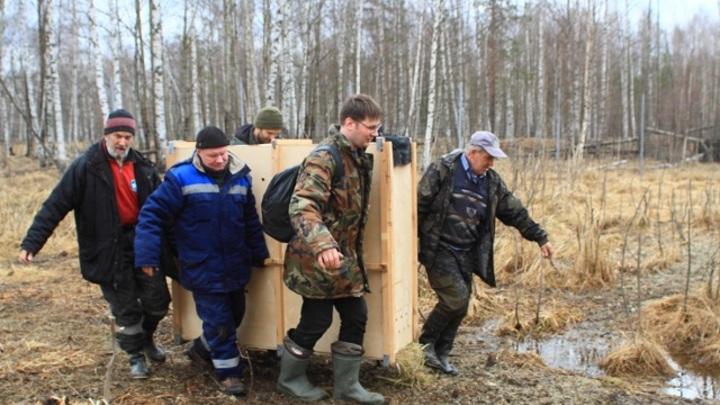 Керженский заповедник выпускает лесных северных оленей в дикую среду