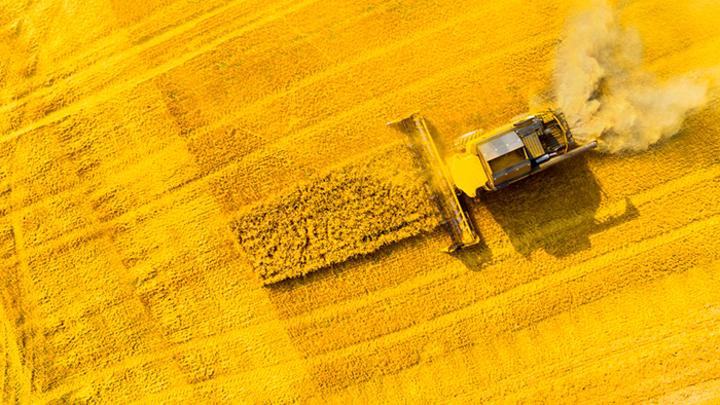 Команда Зеленского готова пустить украинские земли с молотка