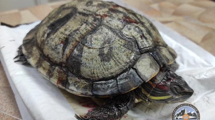В Петербурге волонтеры «Кошкиспас» провели спецоперацию по спасению черепахи