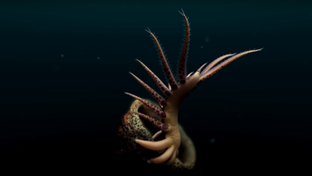 Опубликовано видео древнего червя, размахивающего длинными конечностями в поисках жертв