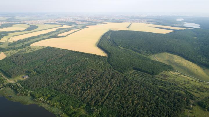 У нас законы суровые, но...: Как легко чёрные лесорубы продают русский лес в Китай - эксперт