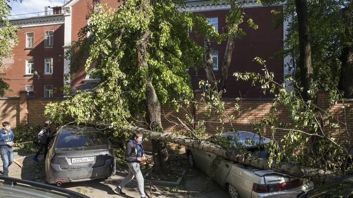 От 100 тысяч до 1 млн: Собянин утвердил размер компенсаций пострадавшим от урагана в Москве