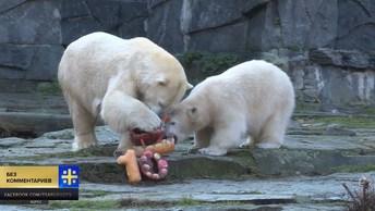Белый медведь Тоня из Берлинского зоопарка празднует свое десятилетие