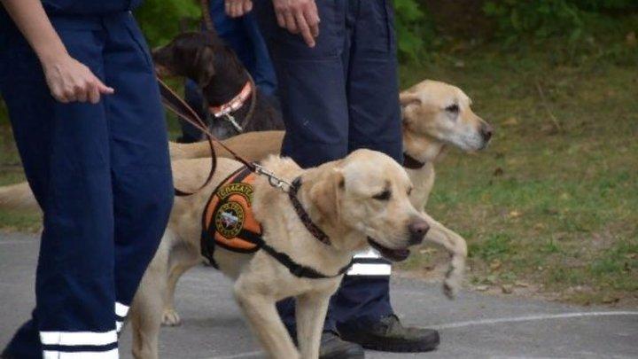 Служебные собаки новосибирской таможни обнаружили 3,5 млн недекларированных рублей