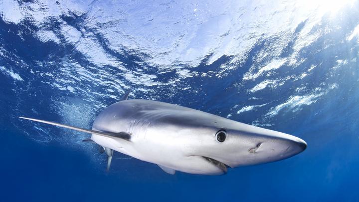 Китаец хотел похитить зубы доисторической акулы