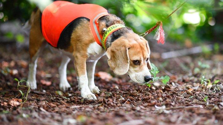 Китайские ученые создали клон собаки с измененными генами