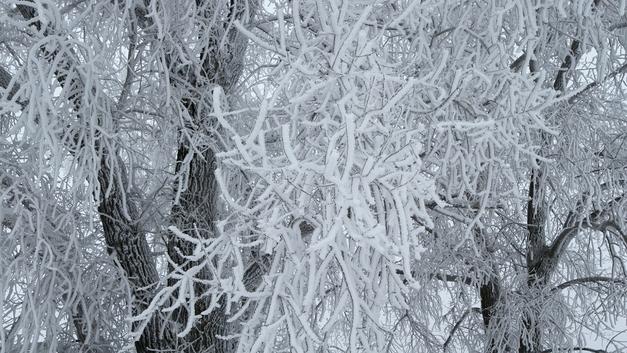 В Белгородской области объявлено штормовое предупреждение из-за аномальных морозов