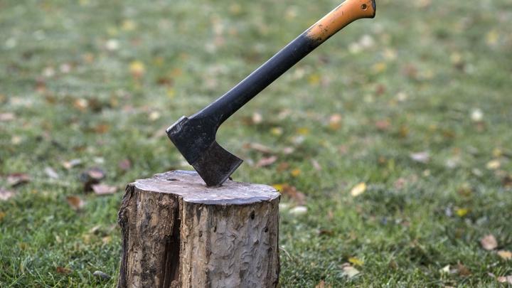 Губернатор Глеб Никитин высказал мнение о законности вырубки деревьев на Щёлоковском хуторе