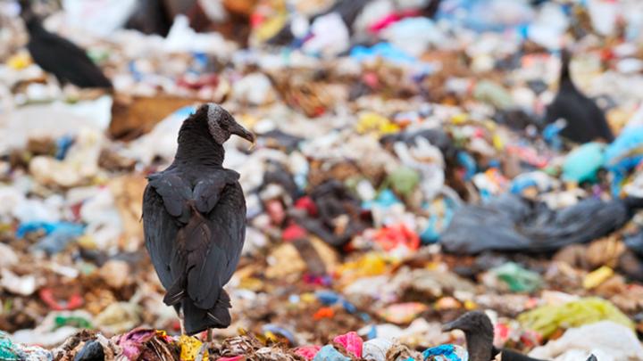 Один за всех: В России появится единый оператор по переработке мусора