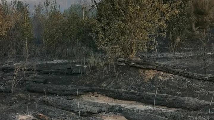 Масштабный пожар в тольяттинском лесу может быть выгоден Ерину?
